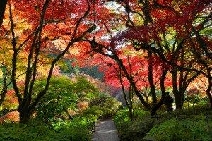 Autumn - PR13AUJG5924